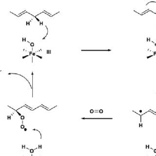 Enzymatic Cycle Diagram by Chemical Structure Of Phenolic Acids And Monotrrpenoid