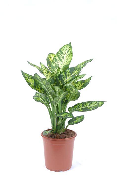 plante interieur pas cher plante
