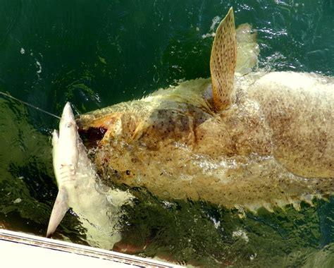 Bid Fish Big Baits Big Fish Fish The Florida Fishing Holidays
