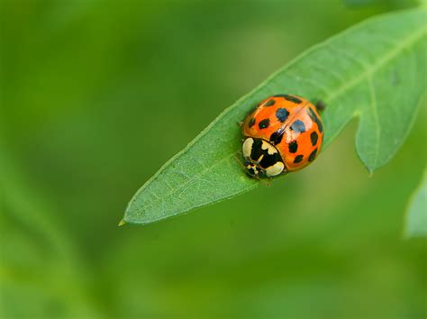 top garden pests that actually help your garden grow better