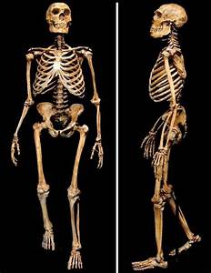 neanderthal fossil - Google Search | Illustration 314 ...