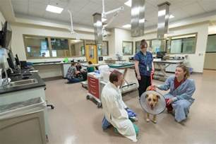 csu animal hospital csu opens spacious state of the veterinary cancer
