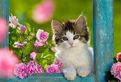 Kitten Kittens Wallpapers Cat Cats Kitty Animals