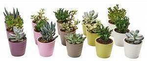 Mini Succulente Pas Cher : plante succulente une le on d 39 conomie d 39 eau ~ Teatrodelosmanantiales.com Idées de Décoration
