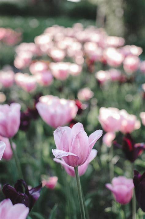 Britzer Garten Eintrittspreis by Ausflugsziele Berlin Britzer Garten Andysparkles De