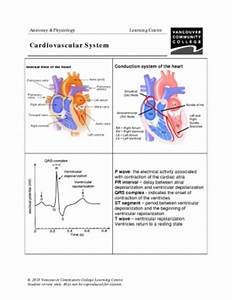 Nervous System Anatomical Chart Vcc Lc Worksheets Anatomy Physiology Biology 1120 1220