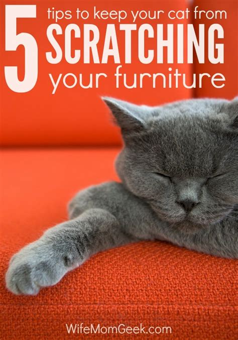 Stop Cat From Scratching Furniture how to stop a cat from scratching your furniture