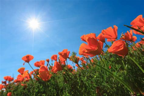 Where You Can Mark Remembrance Day 2019 | AllClear Travel Blog