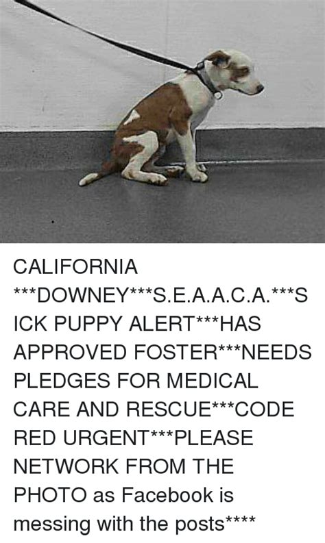 Sick Puppy Meme - california downey seaaca sick puppy alert has approved foster needs pledges for