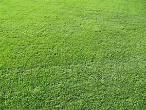 Rouleau Gazon Naturel : gazonniere de l 39 atlantique nantes gazon ~ Melissatoandfro.com Idées de Décoration