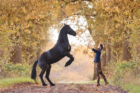 horses horse friesian facts boy interesting cat wings today turned him probably know days reddit redd crazy comments didn netherlands