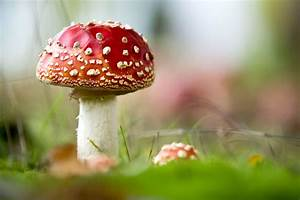 A Mushroom Out Of A Fairy Tale That You Might Find In The