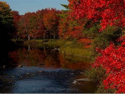 Maine Foliage Fall September Limerick Nelson Past
