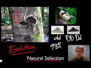 Unit 1 Review - Natural Selection - YouTube