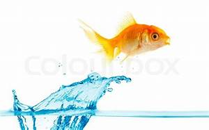 Gold small fish jumps out of water   Stock Photo   Colourbox