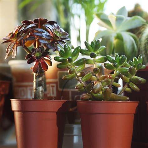 succulent mix  plants house office  indoor pot