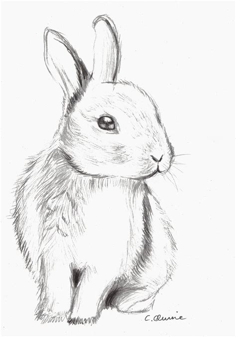 Best Cute Bunny Drawings Ideas And Images On Bing Find What You