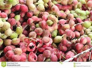 Manila Tamarind Fruit At The Market Stock Photo - Image ...