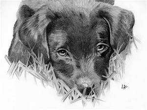 Black Lab Puppy Drawing | www.imgkid.com - The Image Kid ...
