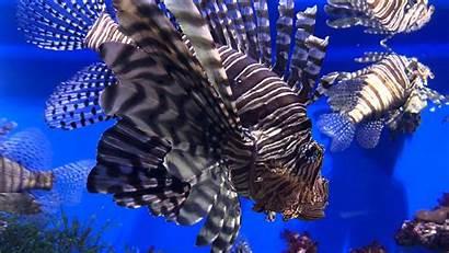4k Ocean Fish Sea Wallpapers Creature Walls