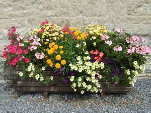 Jardiniere Fleurie Plein Soleil : jardiniere de fleurs plante fleurie exterieur maison ~ Melissatoandfro.com Idées de Décoration