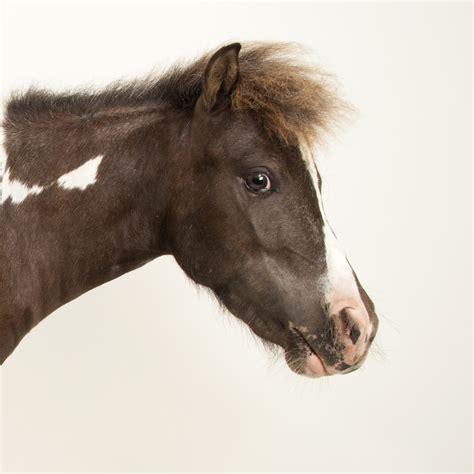 horse horses animals national geographic mammals zebras facts animalia rights nationalgeographic