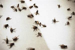8 Natural Solutions On How To Get Rid Of Flies