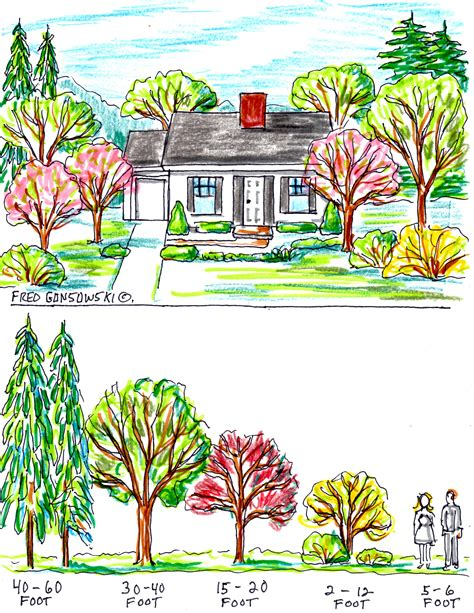 trees you can plant to house some ideas about planting trees by your house for curb appeal fred gonsowski garden home