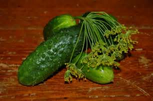 making fermented dill pickles ohioline