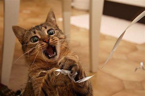 cicas jatekok   legjobb jatek macskaknak es gazdaiknak
