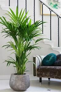 kentia palme balkon garten gartenarbeit haus garten With garten planen mit große blühende zimmerpflanzen