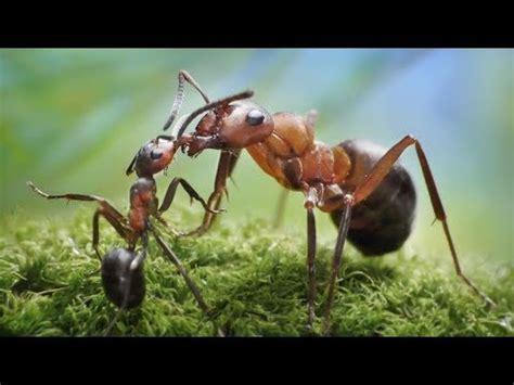 semut semut kecil lagu anak terbaru hd youtube