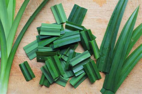 luar biasa  manfaat daun pandan  kesehatan