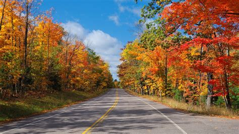 schöne Bilder,Hintergrundbilder 画像,写真,背景,題材,素材 - Bäume