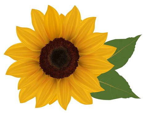 Free Sunflowers Cliparts, Download Free Clip Art, Free ...