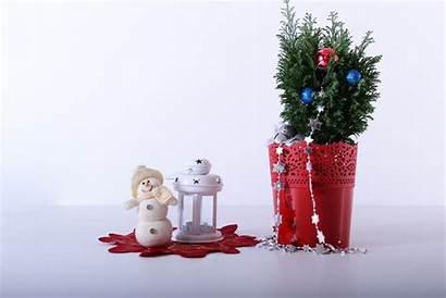 Ornament Wallpapers 4k