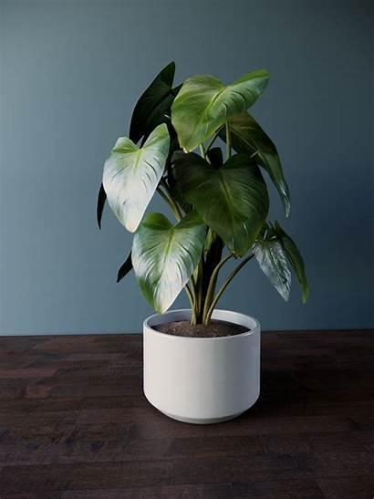 Revit Plant Sizes Pot Four Models Turbosquid