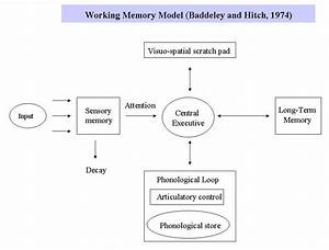 Memory  A Torch Pass  How The Brain Gathers And Encodes