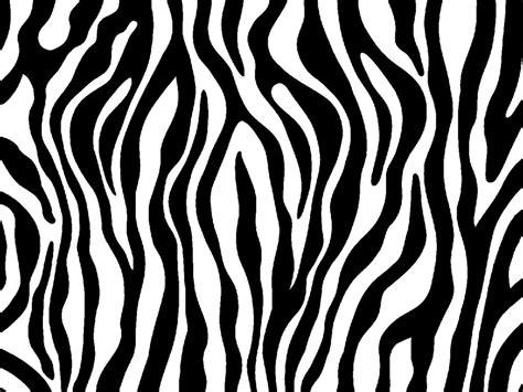 Black And White Animal Print Wallpaper - zebra print wallpaper black and white www imgkid