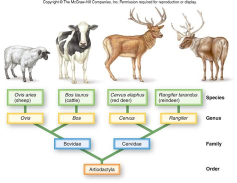 classification of several types of mammals