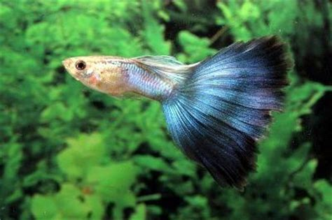 types  tropical fish  pets  pets central