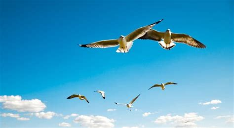 what is the only bird that can fly backwards what type of bird is the only one trivia answers quizzclub