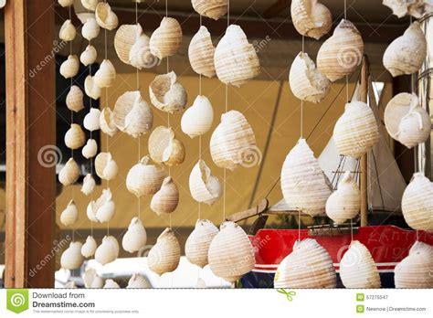 shells for decoration sea shells hanging as decor stock image image 57275547