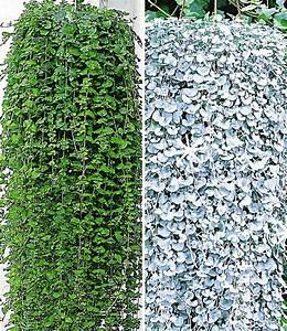 Hängepflanzen Für Balkonkästen : h ngepflanzen kollektion h ngepflanzen bei baldur garten ~ Michelbontemps.com Haus und Dekorationen
