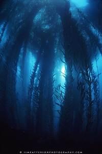 87 best Waves images on Pinterest   Kelp forest, Forests ...