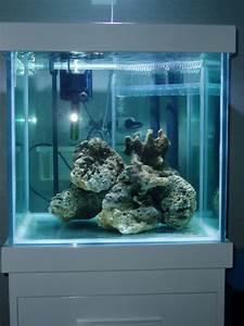 commencer un aquarium d eau de mer 28 images le bac r With tapis champ de fleurs avec housse de canapé 3 places amazon