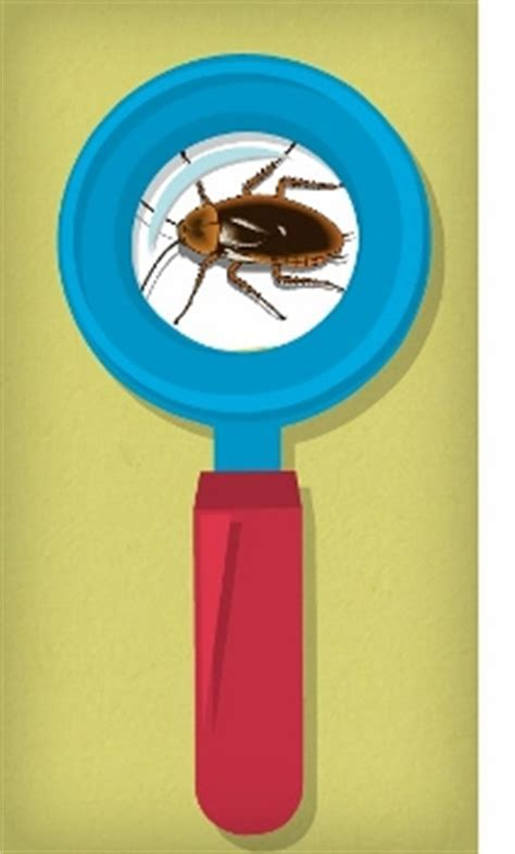 How to Get Rid of Roaches in Your House (Without an