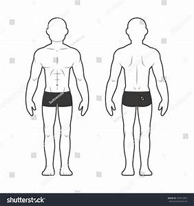 Medical Male Body Chart Muscular Man Stock Illustration