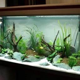 Aquarium Dekorieren Ideen : sch ne aquarium ideen ~ Bigdaddyawards.com Haus und Dekorationen