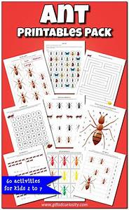Ant Printables Pack  Insect Printables